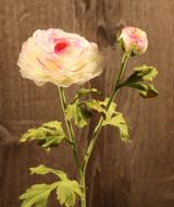 FL10806CRPK Ranumculus Cream 1 Flower 1 Bud Cream Pink 20""