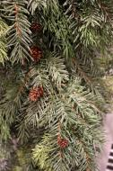XZ10001 Mixed Pine Cedar Pinecone Garland 10' x 12""