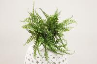 BG10272GR Fern Bush Green 17""
