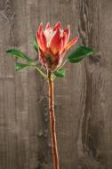 FL11234RD Protea Spray Red 28""