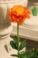 FL11103OR Ranunculus Orange 24""