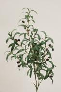 SY10705GYBU Olive Spray w/ Olives Green Burgundy 40""