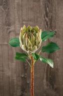 FL11233GR King Protea Green 26""
