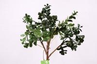 FL11613GR Boxwood Pick Green 22""