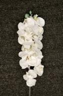 XM11722WHSN Phalaenopsis Spray White w/ Snow 28""