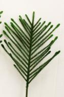 XM12126GR Norfolk Pine Spray Green 38""