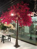 TR10135BY Bougainvillea Tree x 36 Branches 12'