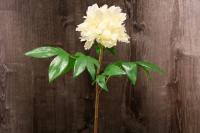 FL11223YE English Peony Spray Yellow 27""