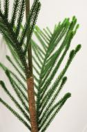 XM12136GRSN Norfolk Pine Branch With Snow Green 8'