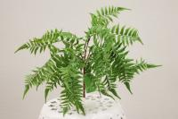 BG10352FRGR Fern Bush Frost Green 31""