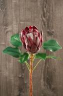 FL11233BU King Protea Burgundy 26""