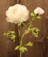 FL10806WH Ranunculus Spray 1 Flower 1 Bud White 20""