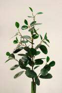 SY10704GR Ficus Spray Green 36""